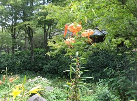 20 高山植物園