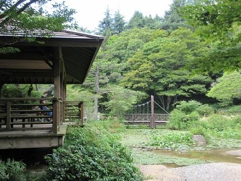 16 高山植物園