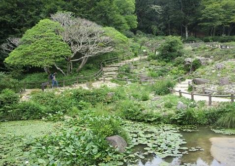 17 高山植物園