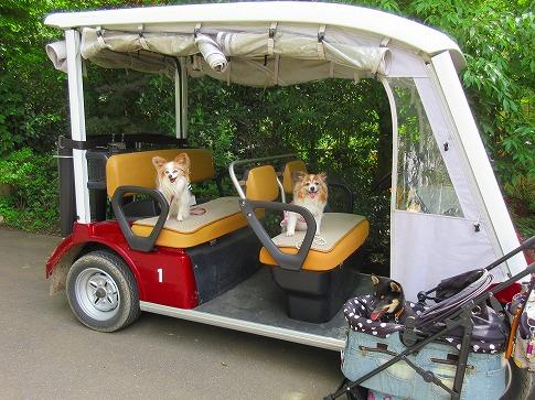 ゴルフカートに乗せてもらいました