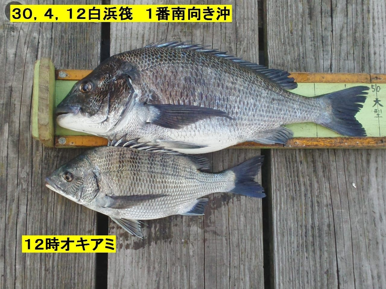 釣果300412