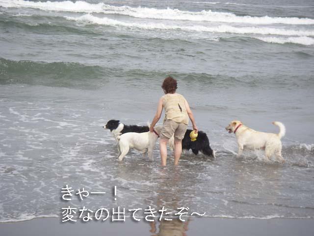 5人娘 海へ行く 7