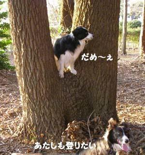 ミリーの木1