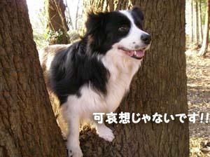ミリーの木3
