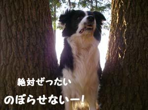 ミリーの木4
