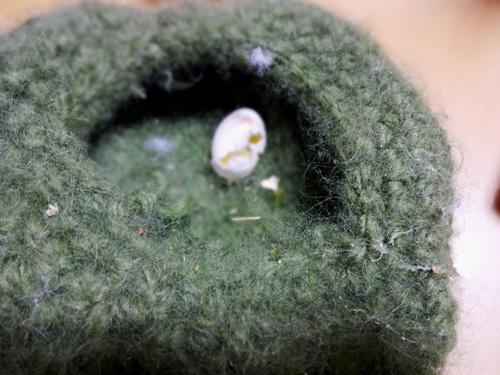 モモが卵を産んだ!