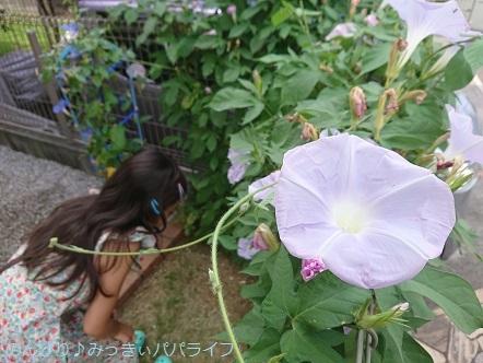 asagao201802.jpg