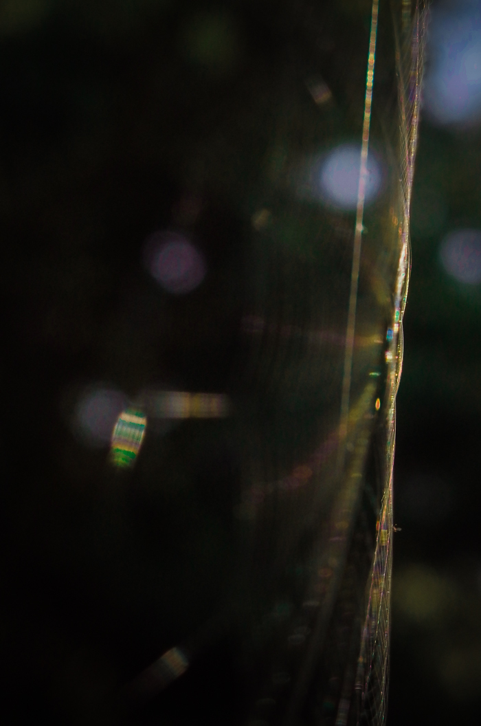 クモの巣20