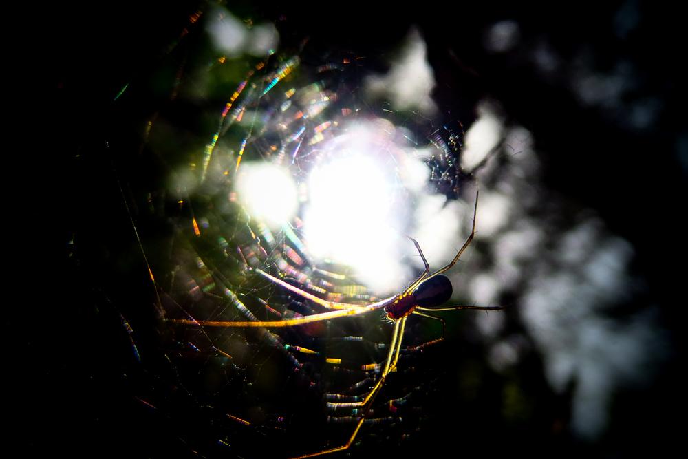 クモの巣21