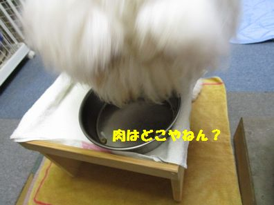 IMG_4556.jpg