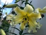 花18179