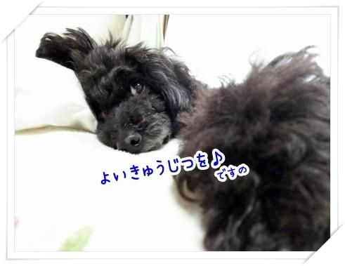 DSC_2016 (450x338)