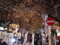 櫻坂@渋谷・20180406・桜まつり2