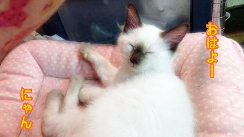 眠い子猫ちゃん