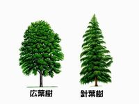 針葉樹広葉樹