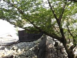 20180430熊本城24