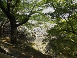 20180430熊本城25