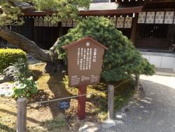 20180430水前寺公園15