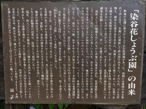 染谷菖蒲園