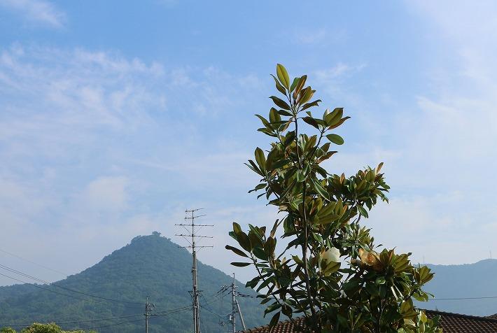 タイサンボクと貴峰山と 30 6 27