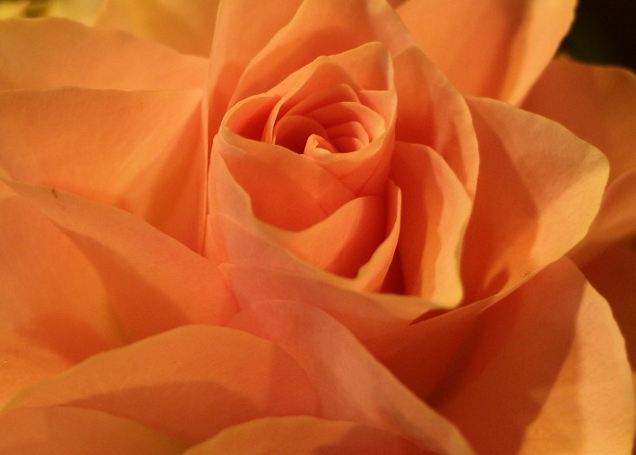 花と灯の活け花展 香露軒 30 4 1