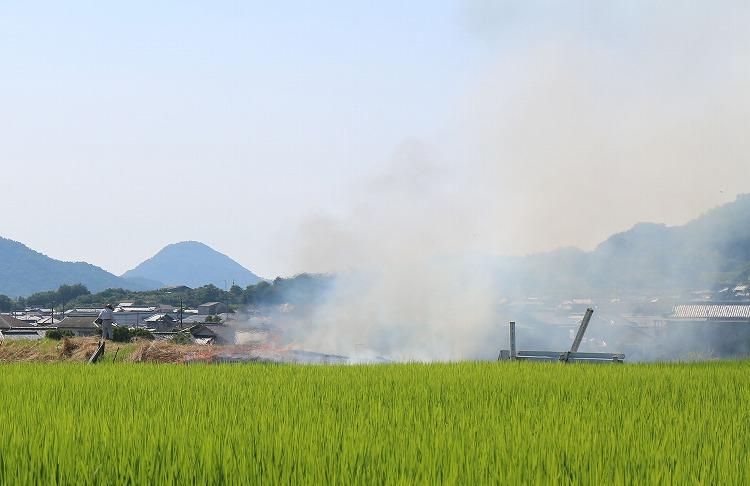 池の土手に煙がいっぱい 30 7 24