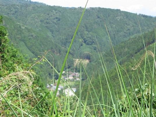 7月22日小沼の滝 016-2j