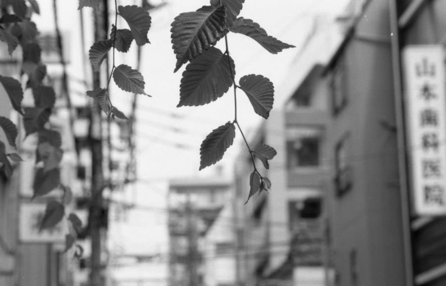 180609_NikonFM_007.jpg