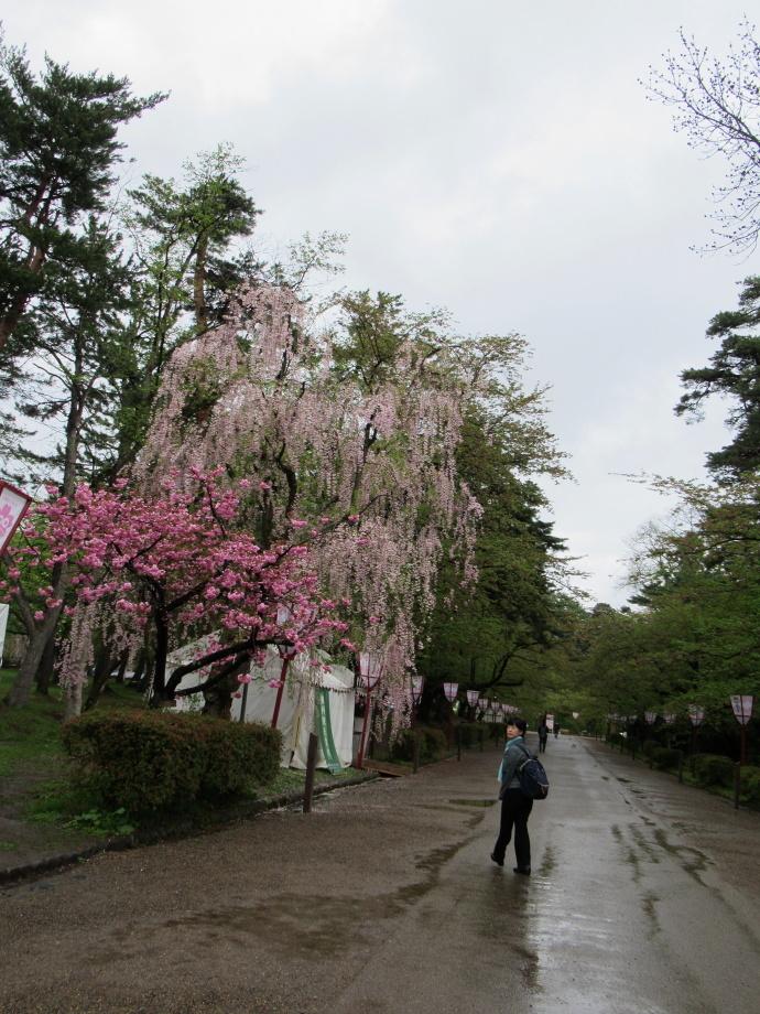 180501弘前城 (3)