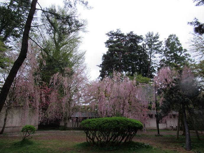 180501弘前城 (6)