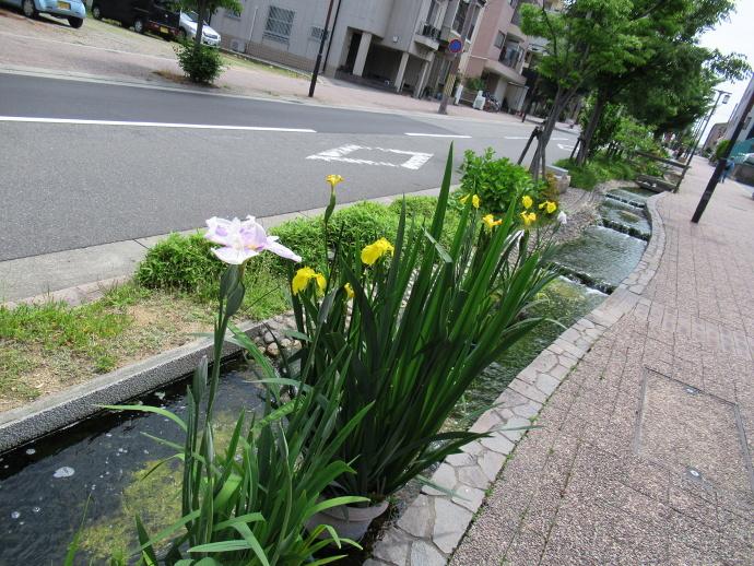 180516神戸 (4)
