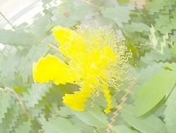 180521薄い黄
