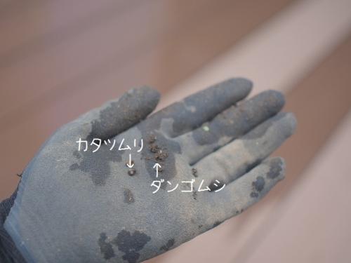 P7070641.jpg