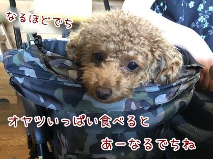 kinako10061.jpeg