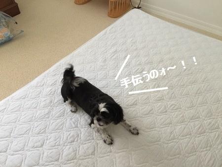 IMG_0946-001moji.jpg