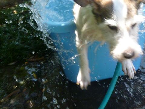 今日から水遊び(5)