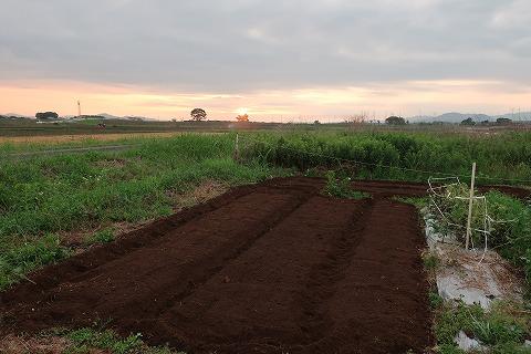 2018.6.7菜園