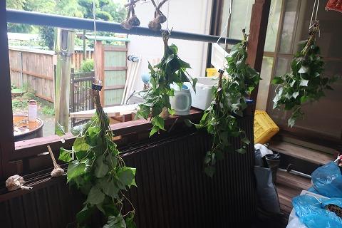2018.6.30菜園31