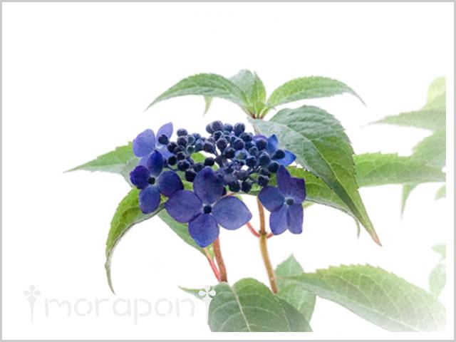 180606 藍姫-2
