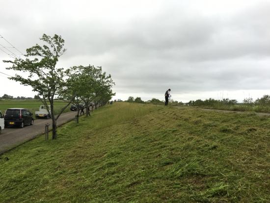 八郎湖堤防清掃 033