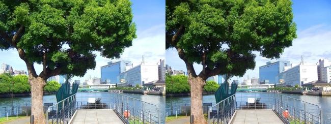 中之島公園 剣先噴水①(交差法)
