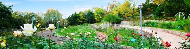 花博記念公園鶴見緑地 バラ園