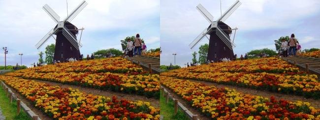 花博記念公園鶴見緑地 風車の丘(交差法)
