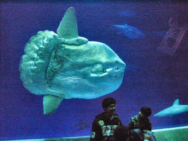 05b 600 sunfish