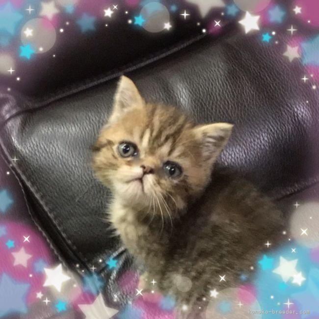 cat_img_1_dc8c1e8179a8.jpg
