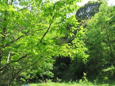 ワガタ工房 虫吉の森の木々