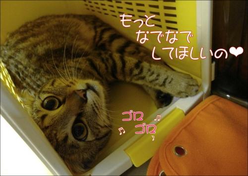 ノアちゃん4