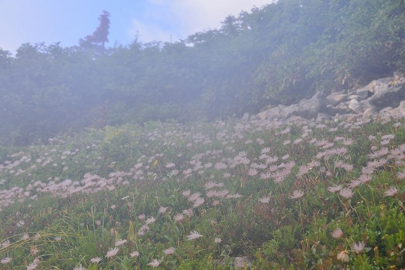 180807鹿島槍ヶ岳 (35)