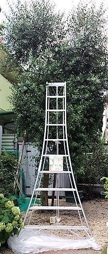 園芸三脚10尺