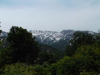 巨大なブナの並ぶ登山道